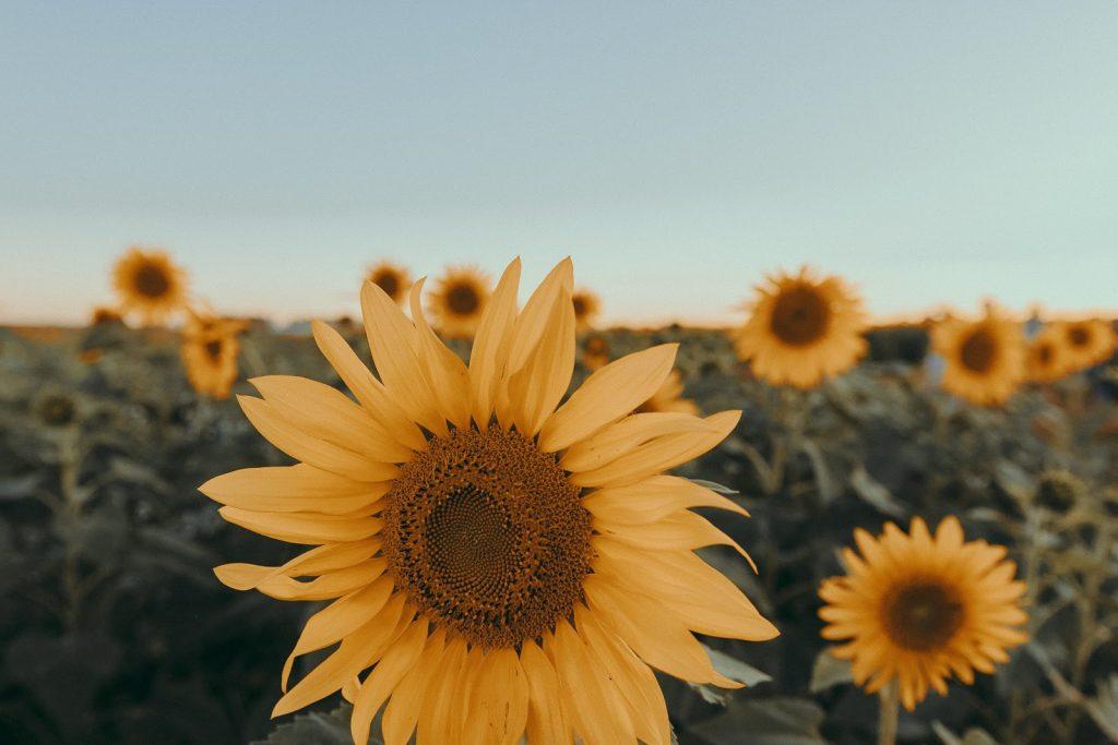 Folge deiner Sonne